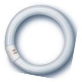 L 40W/865 C G10Q лампа люм. кольцевая  Osram