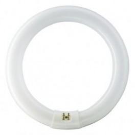 TL-E 22W/33-640 G10q лампа люм. кольц.Philips